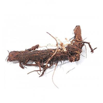 Rhizome de houblon - 17 variétés (QC) Pré-commande
